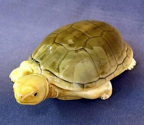 Черепаха большая, СЦ